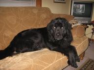 Brandey December 2008