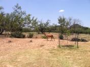 Red Deer Rescue